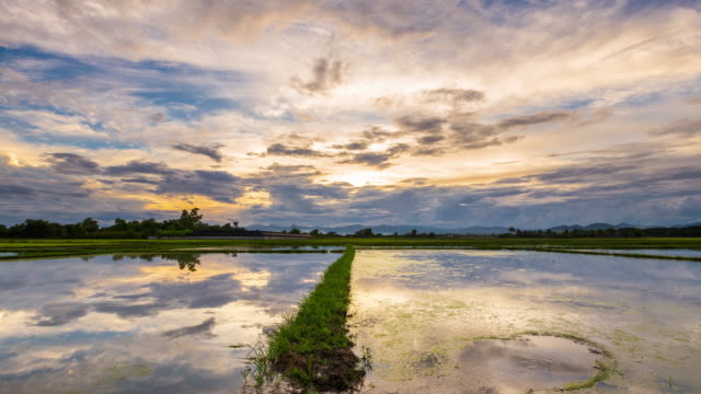 Rice field and water reflection day to sunset Time-lapse.