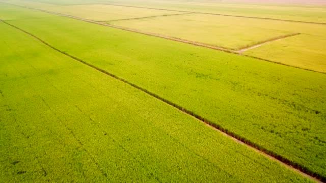 vidéos et rushes de rizière à l'aube - rizière