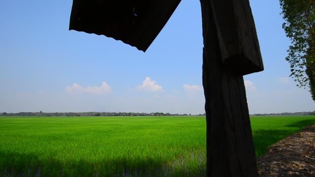 vídeos y material grabado en eventos de stock de campo de arroz - veinte segundos o más