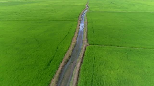 Rice field (paddy field)