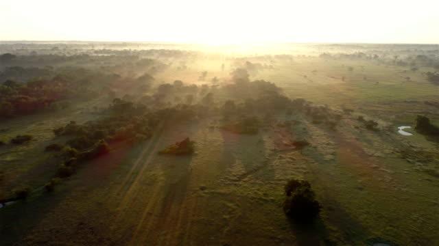 stockvideo's en b-roll-footage met rijst (paddy veld) - sri lankaanse cultuur