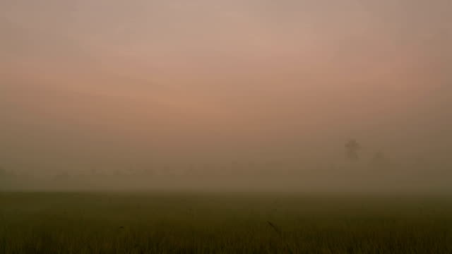 rice field with fog at sunrise or dawn - paddy field stock videos & royalty-free footage