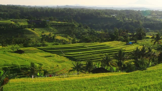 rice fields in bali, indonesia - indonesia volcano stock videos & royalty-free footage
