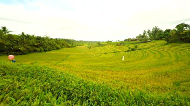 Vue aérienne de champs de riz à Bali