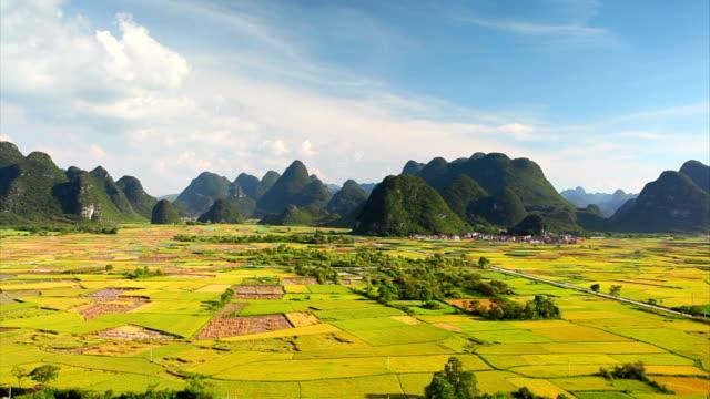 Rice fields in huixian town,yangshuo,guilin,china