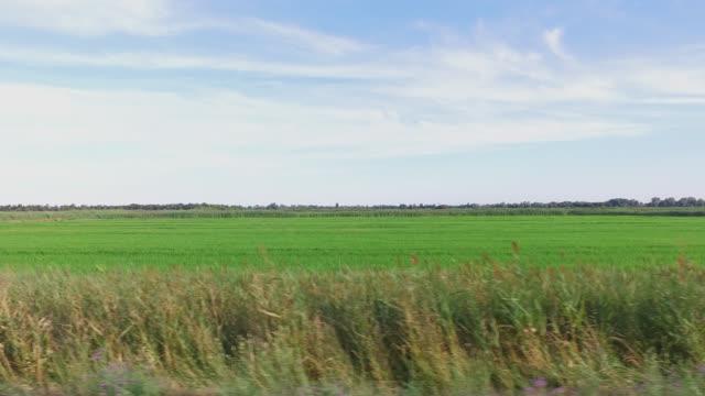 vidéos et rushes de rice fields in the camargue - rizière