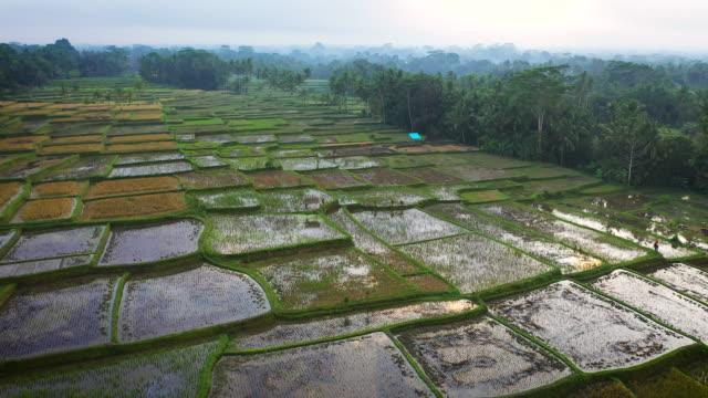 rice fields of ubud - ubud district stock videos & royalty-free footage