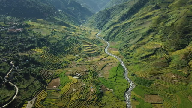 rice fields on terraced at yenbai vietnam.beautiful terraced rice field in harvest season in sunset in mu cang chai - rice paddy stock videos and b-roll footage
