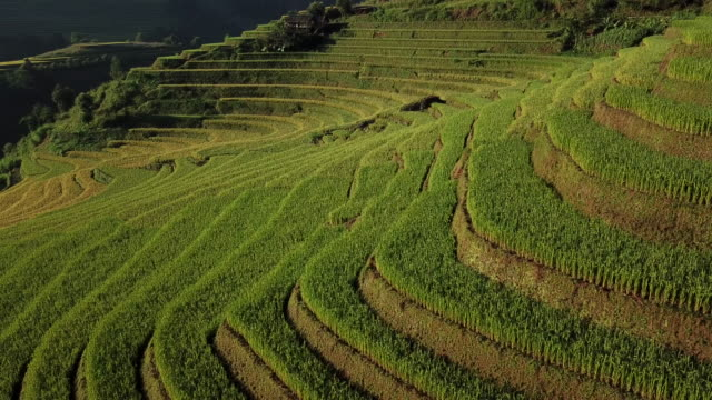 rice fields on terraced at yenbai vietnam.beautiful terraced rice field in harvest season at mu cang chai - rice terrace stock videos and b-roll footage