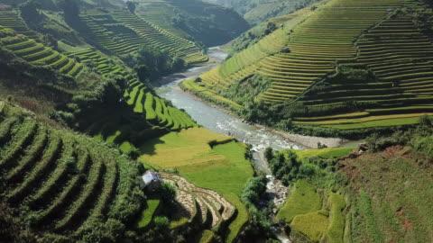 stockvideo's en b-roll-footage met rijstvelden op terrassen bij yenbai vietnam.beautiful terrasvormige rijst veld in oogstseizoen bij mu cang chai - bali