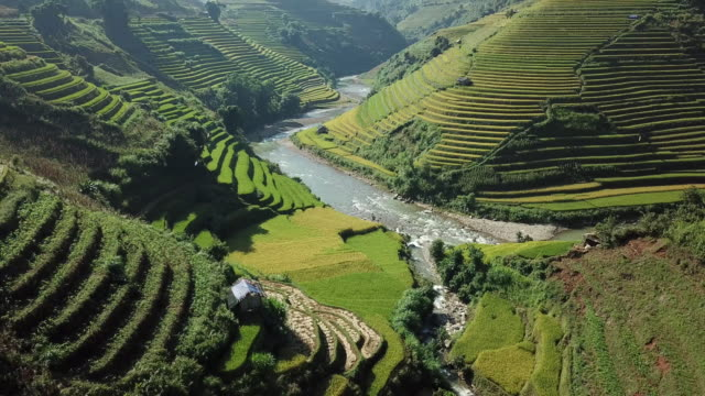 rice fields on terraced at yenbai vietnam.beautiful terraced rice field in harvest season at mu cang chai - vietnam stock videos & royalty-free footage