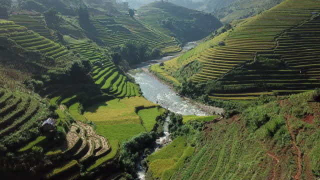 rice fields on terraced at yenbai vietnam.beautiful terraced rice field in harvest season at mu cang chai - sa pa stock videos and b-roll footage