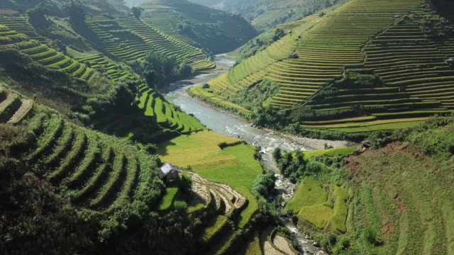 rice fields on terraced at yenbai vietnam.beautiful terraced rice field in harvest season at mu cang chai - cambodia stock videos and b-roll footage