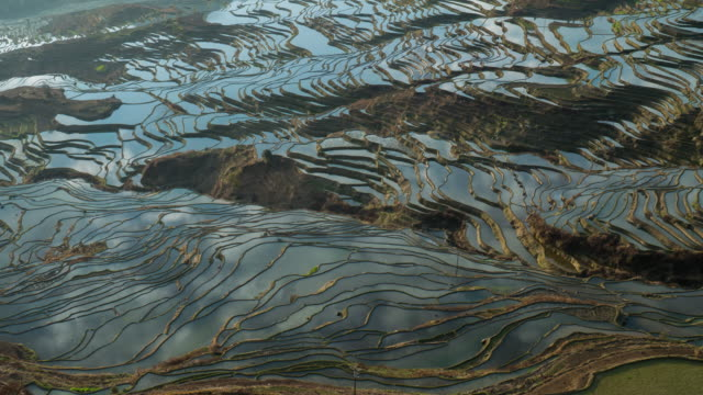 Rice fields on terraced of yuanyang,china.