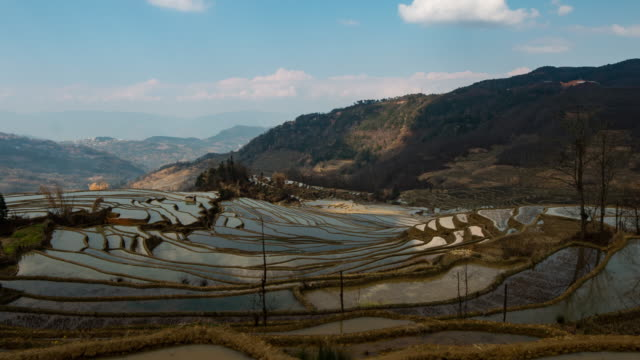 rice fields on terraced of yuanyang,china - asian tribal culture stock videos and b-roll footage