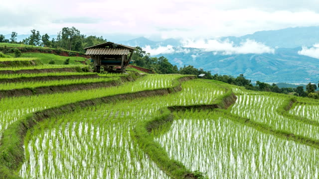 rice fields on the mountain. - rice paddy stock videos & royalty-free footage