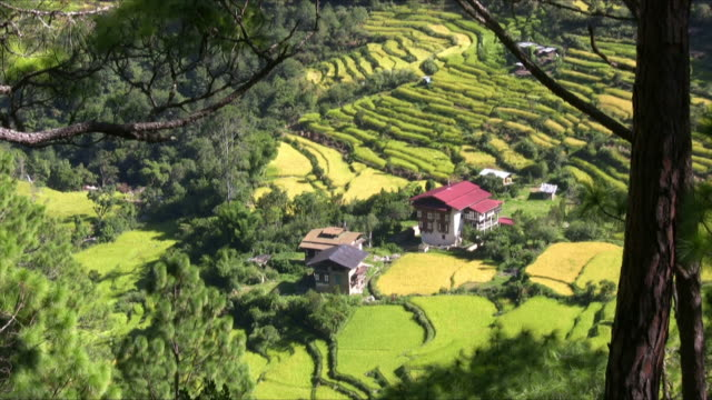 rice fields through trees - bhutan stock videos & royalty-free footage