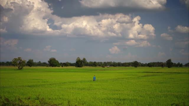 Reis Felder Zeitraffer