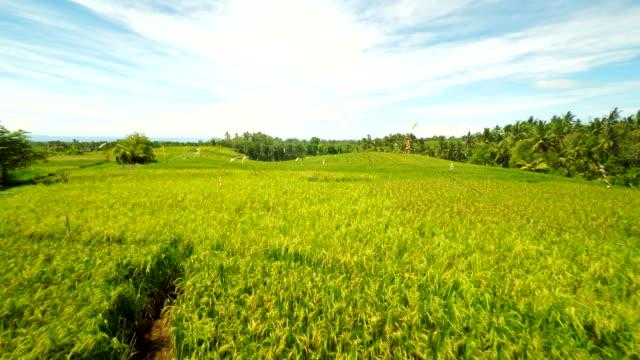 Vue aérienne de champs de riz