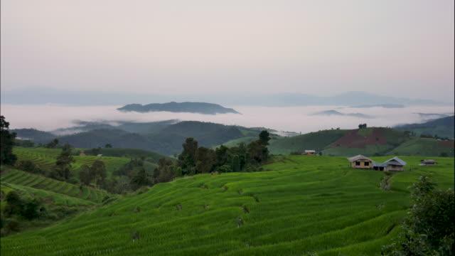vidéos et rushes de riz a déposé et montagne dans un brouillard time-lapse, ban pa bong alexandre hill tribu village, chiang mai, thaïlande. - cereal plant
