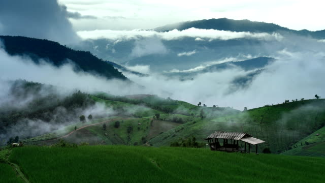 Rice filed and Mountain in a foggy time-lapse, Ban Pa Bong Piang Hill tribe village, Chiangmai, Thailand : LD