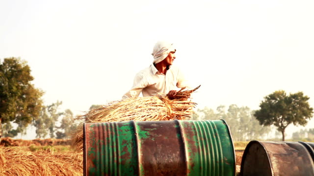 rice harvesting - threshing stock videos & royalty-free footage