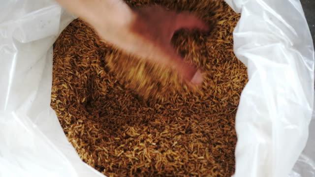 4k : buccia di riso in sacchetto di plastica per l'agricoltura - buccia video stock e b–roll
