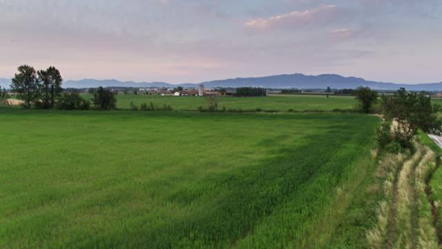 vídeos y material grabado en eventos de stock de arrozales y tierras de cultivo en cataluña - vista aérea - campo de arroz