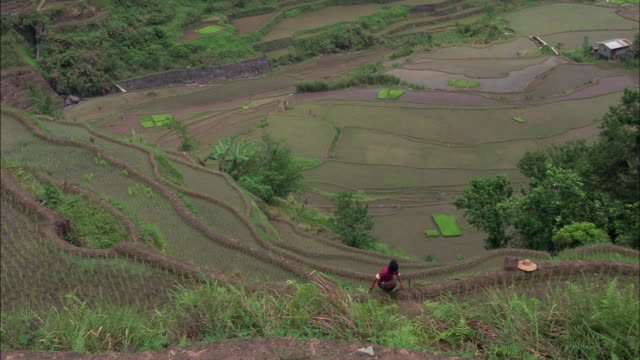 Rice paddies cover a terraced hillside overlooking a valley.