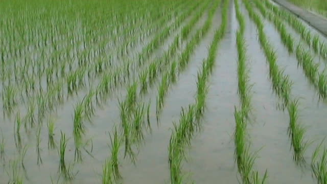 rice paddies in japan - anamorphic stock videos & royalty-free footage