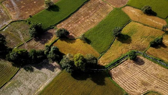 vídeos y material grabado en eventos de stock de rice paddies - paisaje mosaico