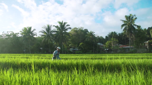 rice paddy farmer working. philippines iconic image - filipino ethnicity stock videos & royalty-free footage