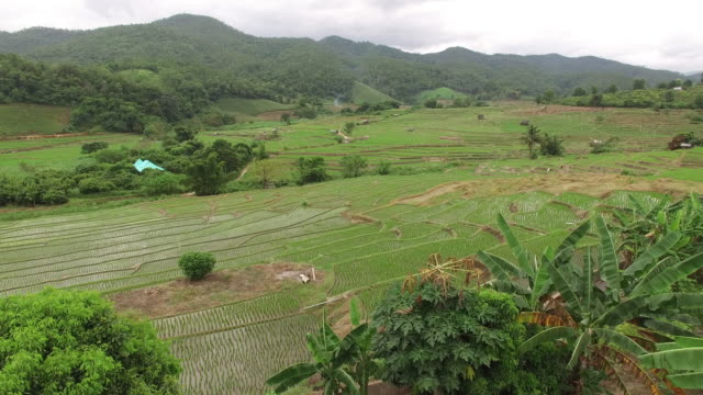 Rice paddy from above