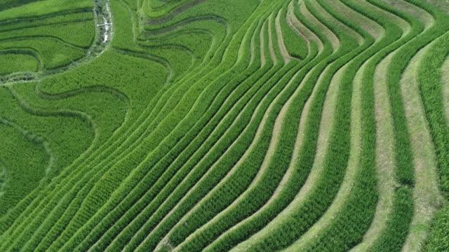 vidéos et rushes de rizière de longsheng - rizière