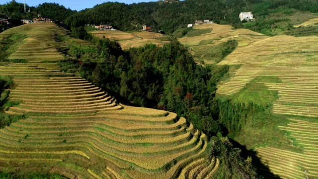 rice paddy in longsheng - rice terrace stock videos and b-roll footage
