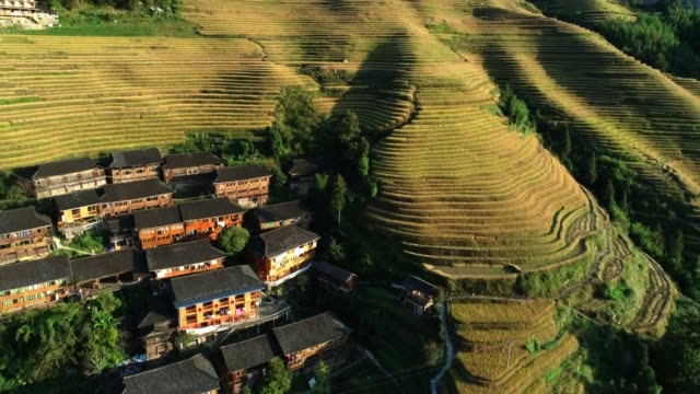 rice paddy in longsheng - guilin stock videos & royalty-free footage