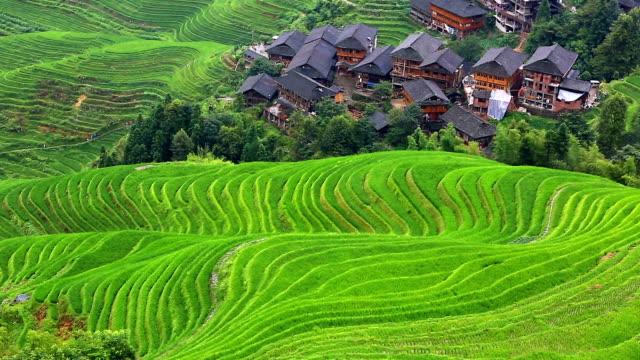 Reisfeld bei Longsheng