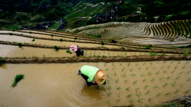 rice paddy in longsheng - rice paddy stock videos and b-roll footage