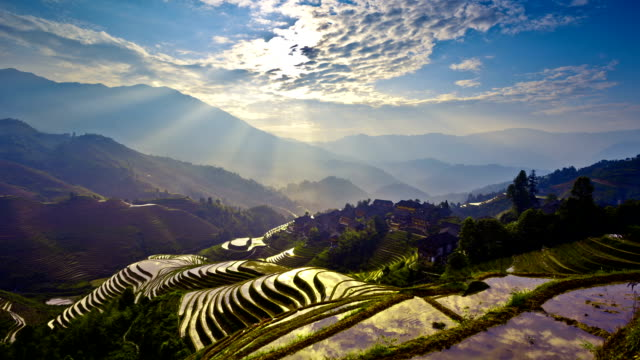 stockvideo's en b-roll-footage met rice paddy in longsheng - aangelegd