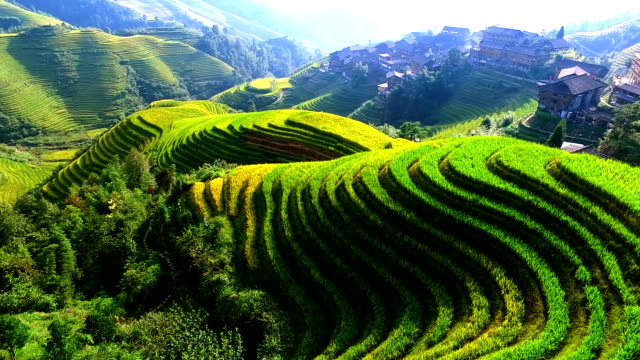 rice paddy in longsheng - famous place stock videos & royalty-free footage