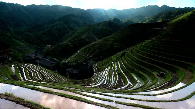 Rice paddy in Longsheng,Guilin,Guangxi,China