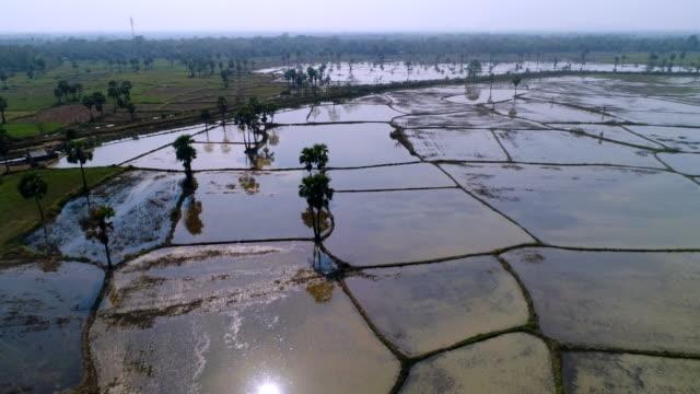 vídeos y material grabado en eventos de stock de rice paddy in southern myanmar - oficio agrícola