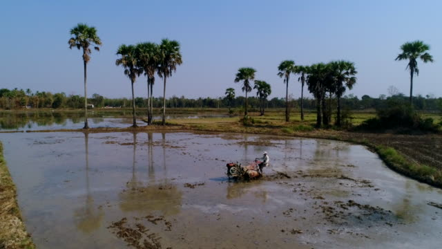 rice paddy in southern myanmar - midday stock videos & royalty-free footage