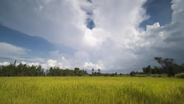 雲の動きと田んぼ - モミ点の映像素材/bロール