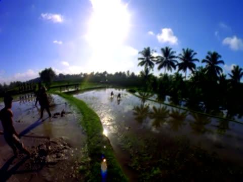 stockvideo's en b-roll-footage met rice padi in bali with farmers fisheye - agrarisch beroep