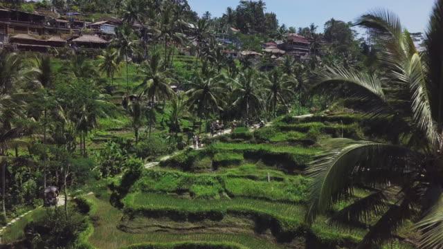 Reisplantationen in Tegalalang auf Bali