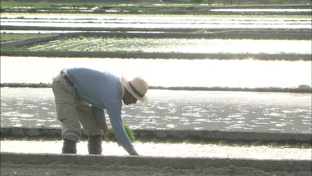 rice planting in the glittering light/ planters - 植える点の映像素材/bロール