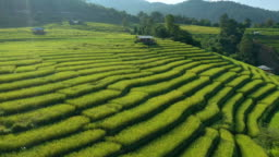 Rice terrace aerial view and tilt up shot