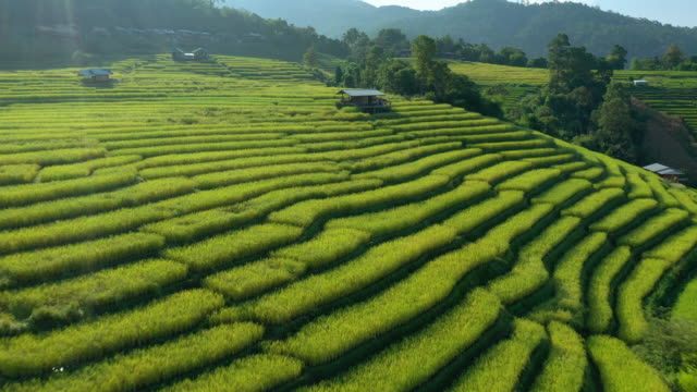rice terrace aerial view and tilt up shot - rice paddy stock videos & royalty-free footage