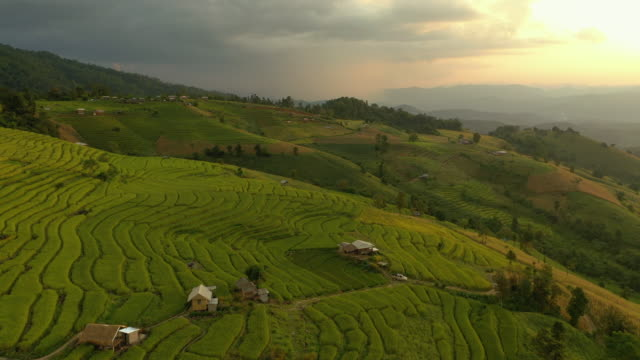rice terrace at sunset time aerial view backward - luzon stock videos & royalty-free footage